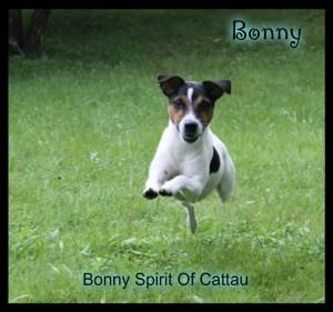 Bonny